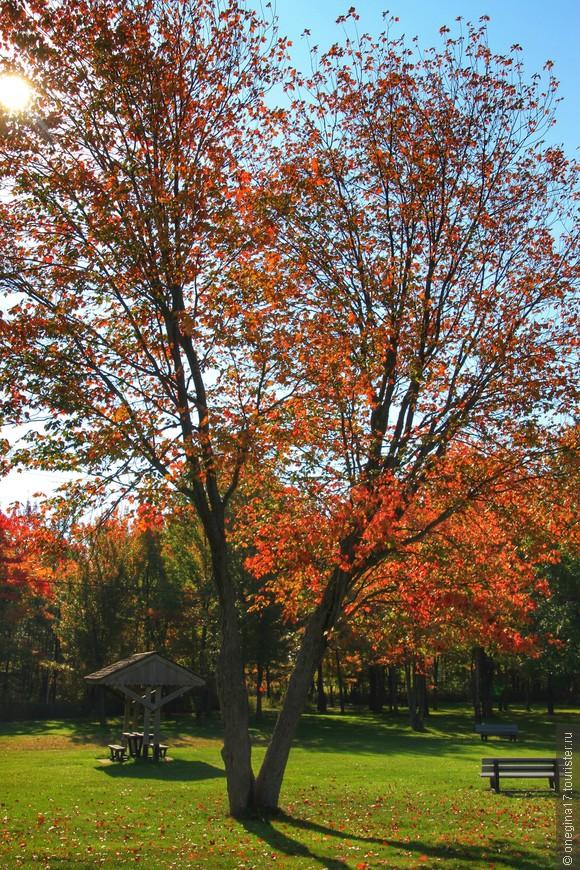 Осень в Квебеке - как фон для города. Добавляет тепла в воспоминания, красок во впечатления и легкую грусть в предстоящую разлуку...