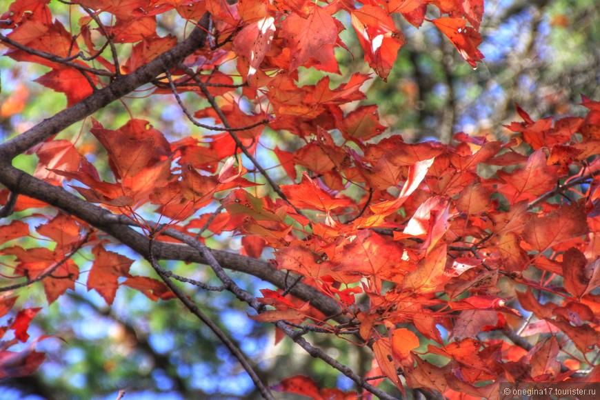 Осень - гордость Квебека, да и всей Канады. Ни в одной стране мира так не любят осень...