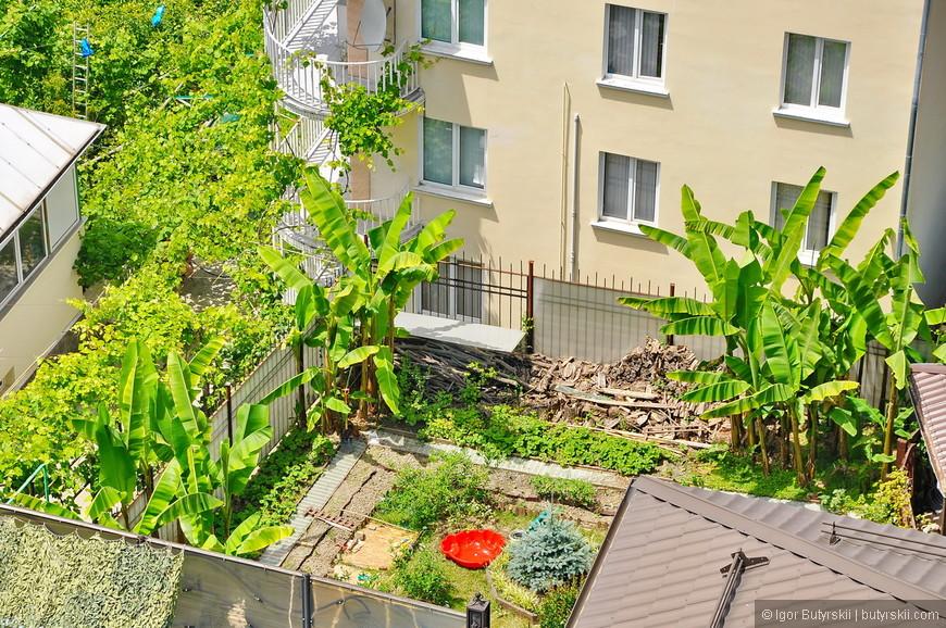 09. Растения тропические, совсем не ожидаешь такие увидеть во дворе дома в России.