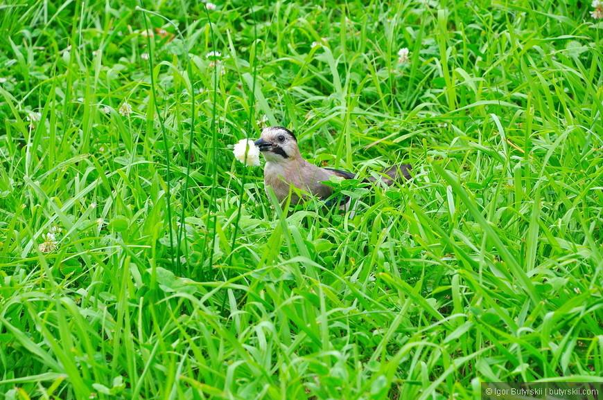 16. В парке встречается большое количество птиц.