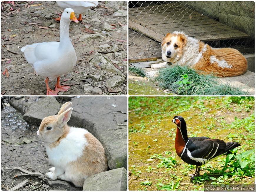 17. И не только птиц, живности в парке хватает.