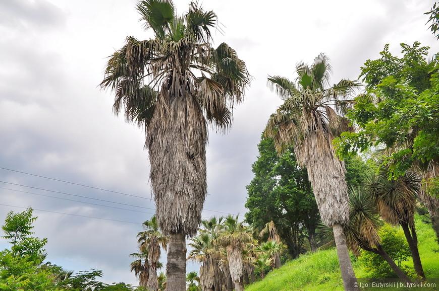 20. В парке огромное количество растений и деревьев.