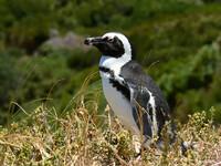Птицы Южной Африки и Намибии. 1