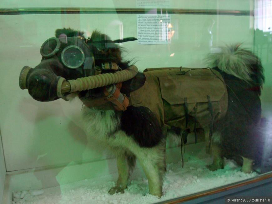 Собачка с Фукусимы.....