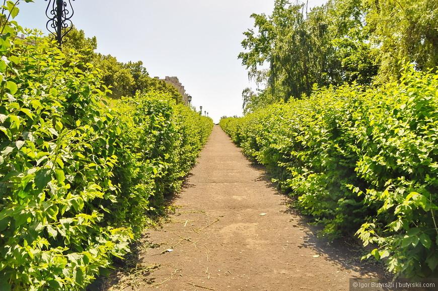 11. Какая чудная аллея с кустами, кусты обычно такой высоты в городе не делают, но в Курске все возможно.
