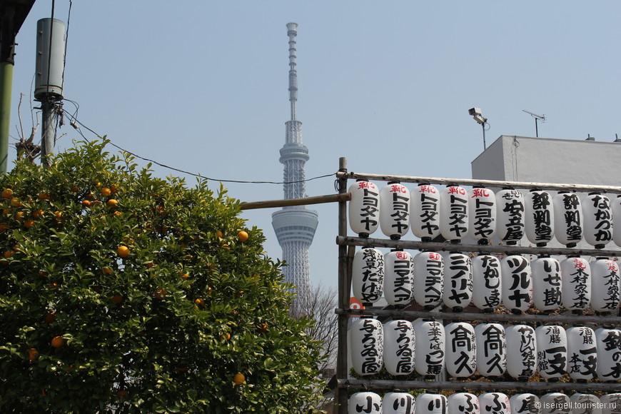 Апельсины на дереве в апреле месяце меня удивили ...(я был первый раз в Азии).