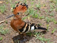 Птицы Южной Африки и Намибии. 2