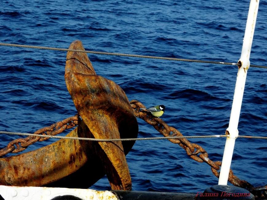гости на борту - до ближайшего берега 14 км