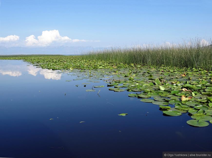 Хотя местами очень похоже на какой-нибудь водоём в средней полосе России...   Но энергетика всё равно другая...