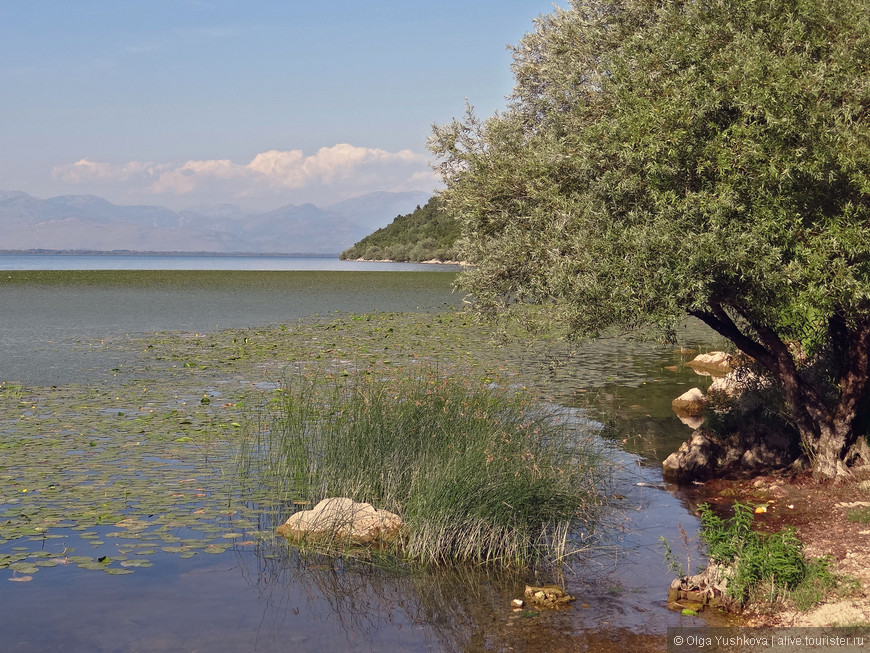 Причалили к берегу... Здесь есть пляж, где можно купаться и загорать... Вода в озере чудесная, местами почти прозрачная... Жалко, что времени на купание было всего полчаса... )))