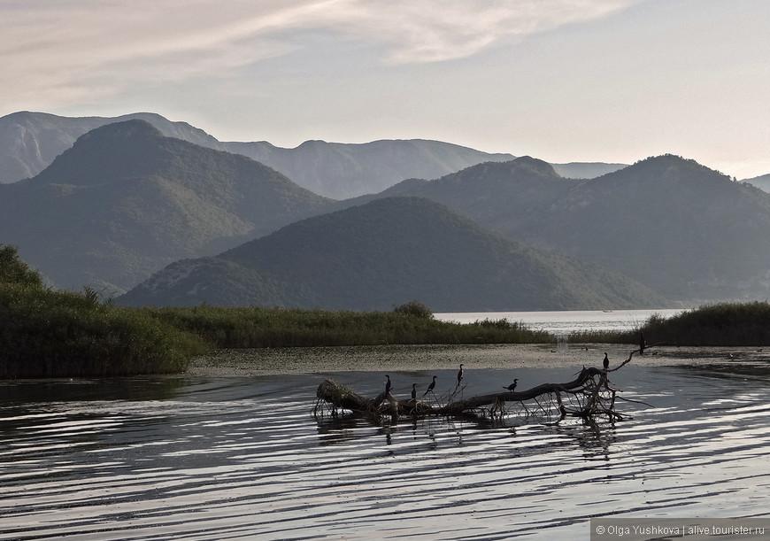 Здешние птицы являются неотъемлемой достопримечательностью озера... Иногда мы старались подплывать к ним поближе, чтобы сфотографировать...