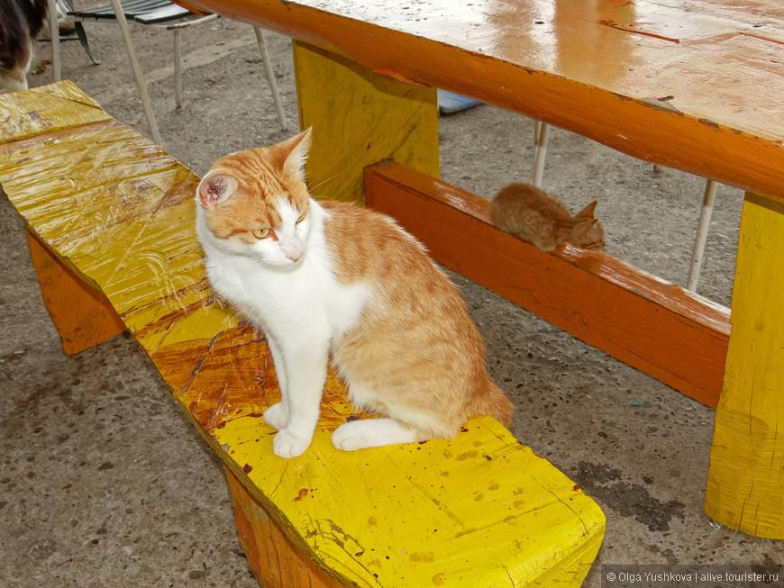 У настоятелей монастыря, - которых мы видели в количестве всего двух человек, - живёт целое кошачье семейство... )))