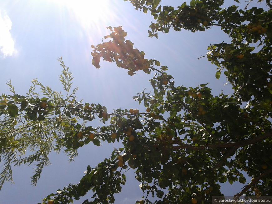 Апельсины в Долине Монахов.