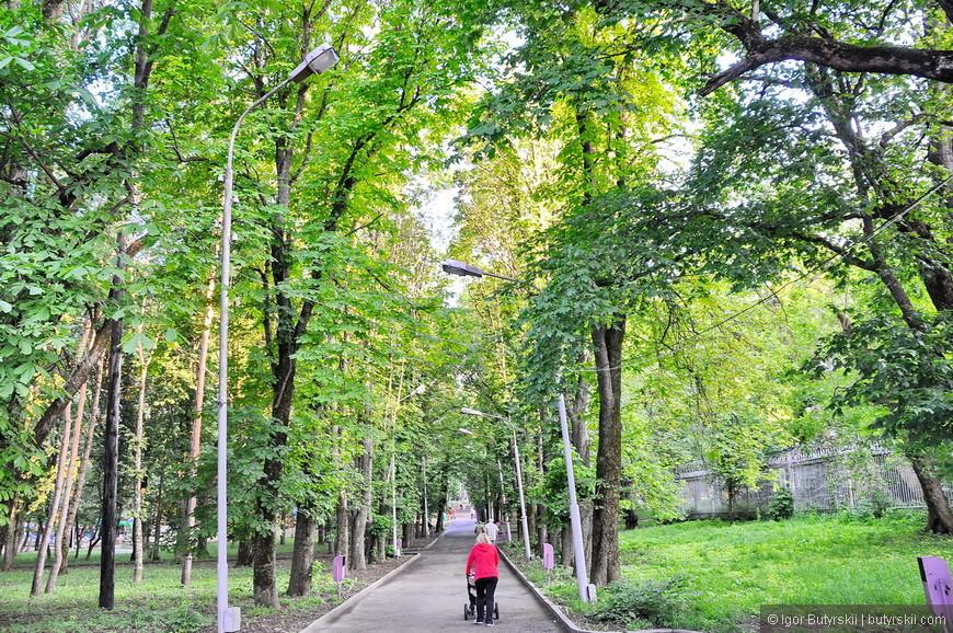 20. Можно прогуляться по центральному парку, интересного в нем мало, но деревья невероятной высоты. Все из-за колоссальных ветров в Ставрополе, вечером был сильный ливень и шквалистый ветер. Я такое видел только один раз в жизни – дождь шел просто горизонтальной полосой все снося на своем пути.