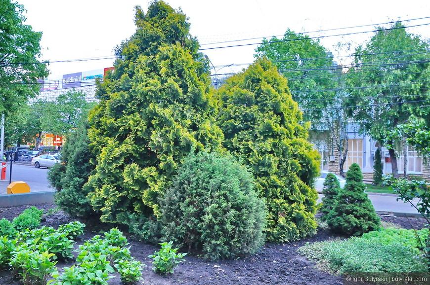 25. Город очень зеленый, со своим спокойным размеренным ритмом, мне понравилось просто гулять по Ставрополю.