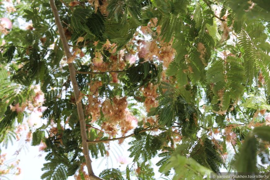 Зелень в центре Ираклиона.