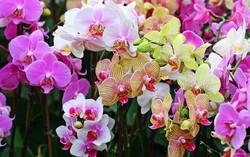 Таиланд приглашает туристов на фестиваль цветов