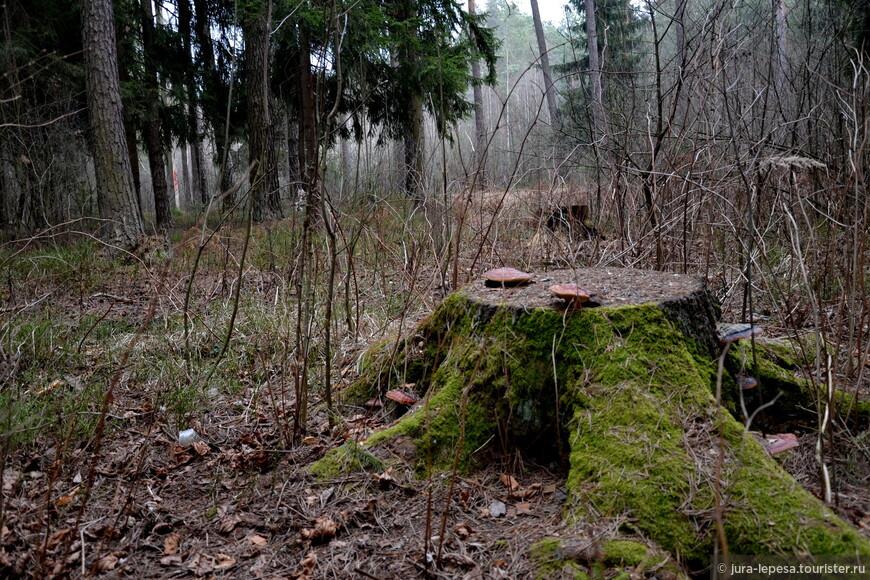 Мы вышли из леса,а кто-то до сих пор в нем.И не плохо и не хорошо.У каждого свой выбор.Ты высмеиваешь колхозника,но при этом покупаешь у него грибы.Он простак,но заработал на своем удовольствии,а ты?