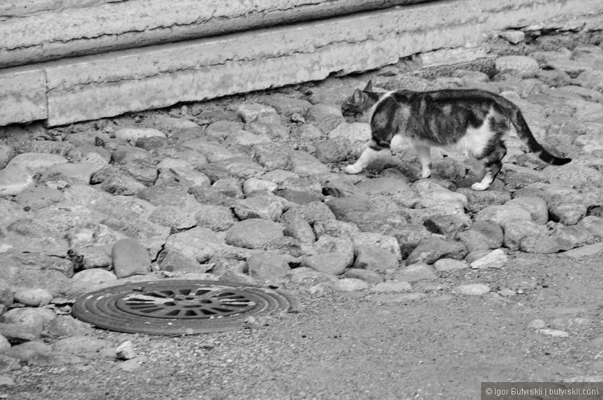 40. Легендарные коты Эрмитажа.