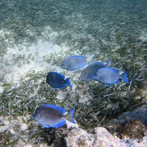 Атлантический океан - обитатели рифов
