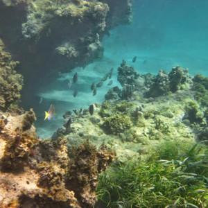 Изучаем прибрежные рифы.