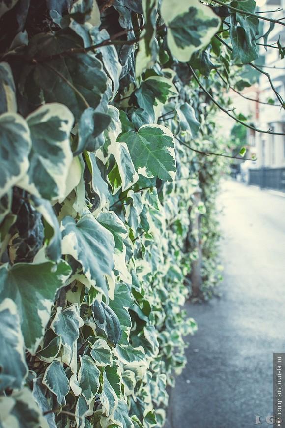 Много зелени и цветов на улицах.
