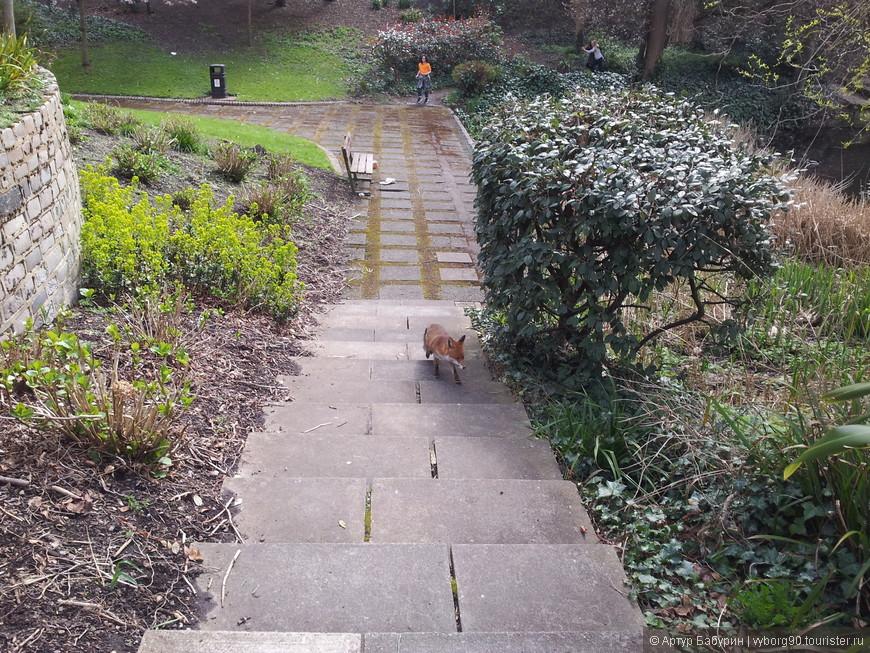 Днём тоже успел увидеть лису, или лИса...