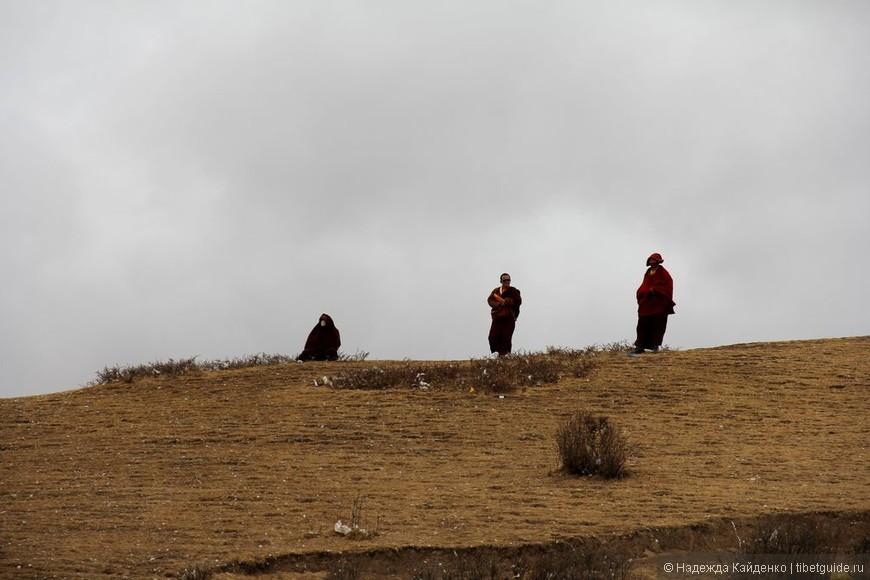 Ламы управляющие грифами
