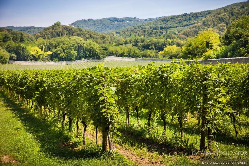 Виноградники Озеро Гарда