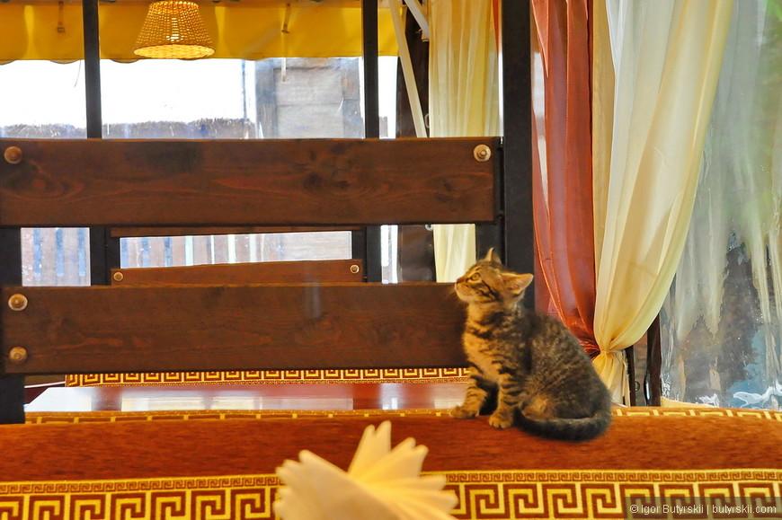 25. В ресторане на набережной была найдена котейка. А вот людей не было практически. Цены на порядок ниже чем в Сочи.