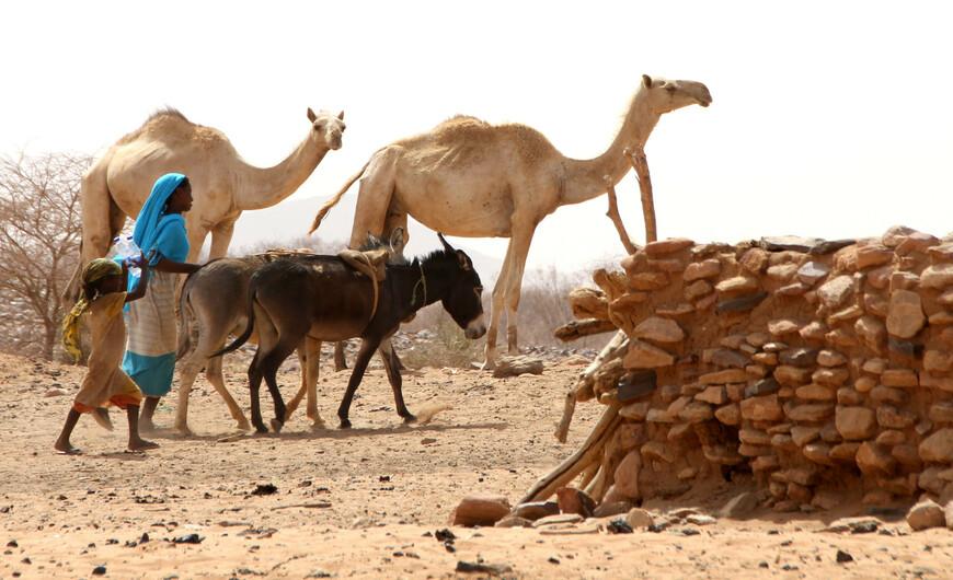 Общая характеристика бедуинов теперь едва ли возможна, так как, при широком распространении этих кочевников, многие черты их сгладились или, напротив, ярче обрисовались под влиянием различных помесей и местных условий.