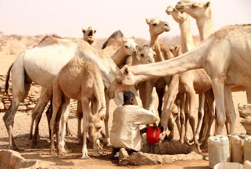 С завоеванием Африки мусульманскими арабами в VII веке они заняли Сахару, которая стала для них второй родиной. Таким образом, бедуинские племена арабского происхождения завоевали пространство, простирающееся от западной границы Персии до Атлантического океана и от гор Курдистана до культурных государств негритянских народов Судана.