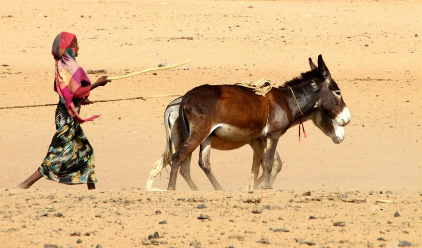 Все бедуины исповедуют теперь ислам, за исключением некоторых племен в Сирии, образующих особые секты. Они превосходные наездники, ловкие охотники, необыкновенно искусны в бросании мяча; другие удовольствия их состоят в танцах, пении и слушании сказок.