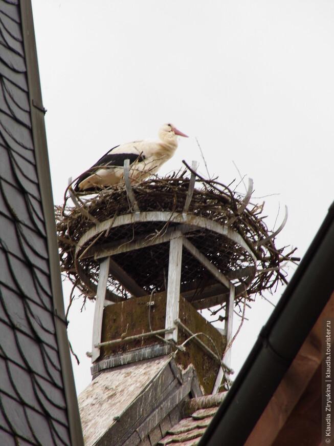Непременный аист на крыше.