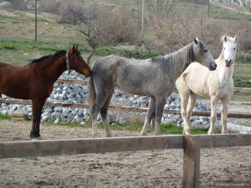 """Каппадокия в переводе с персидского означает """"Страна прекрасных лошадей"""". Здесь в древности пересекались пути из Китая в Европу."""