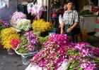 508177-Pak_Khlong_Talat_Flower_Market-Bangkok.jpg