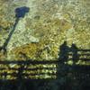 чистейшая река Радовна