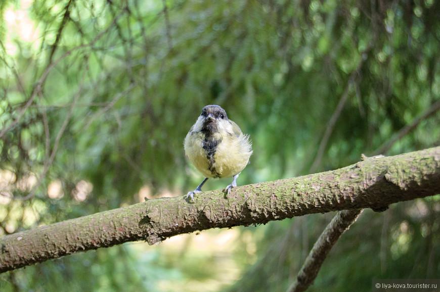 .... и птиц, бросающихся на орехи, которые протягиваешь белкам. :)