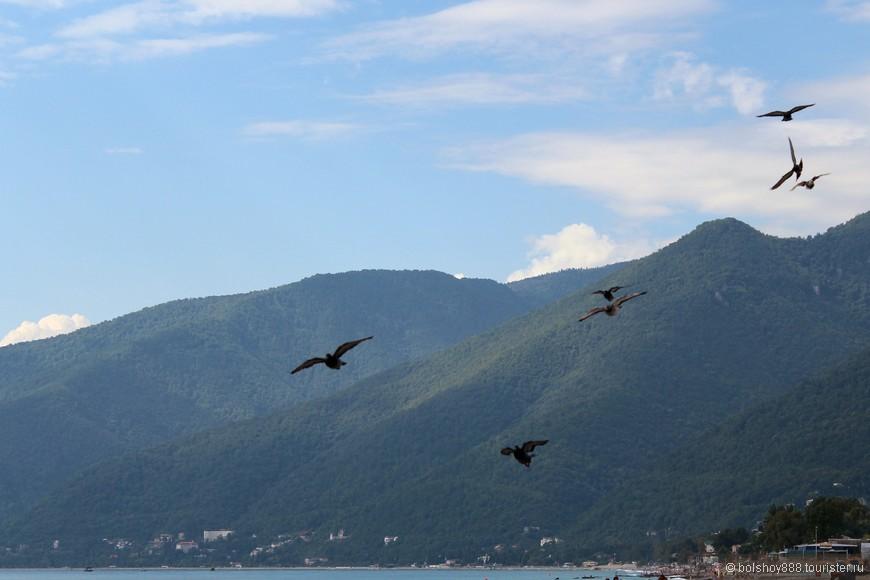 Удачный пейзаж с голубями получился!!! Только жалко моря мало
