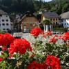 Балконные цветы в Кропе по всюду