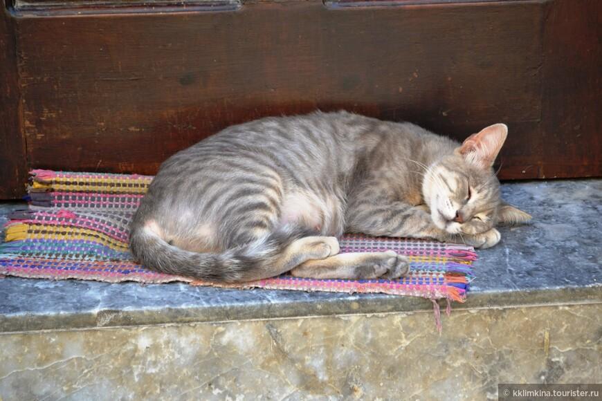 И даже кошки под стать городу милы и очаровательны)