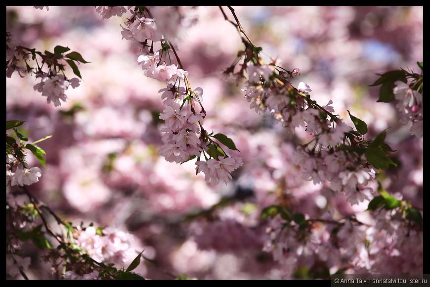 Hастоящий розовый рай!!!