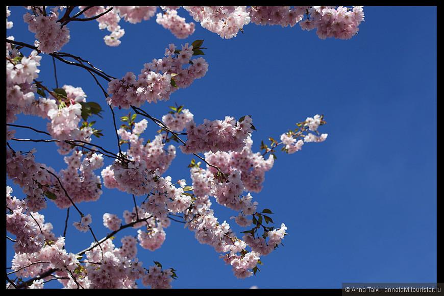 Цветы на фоне голубого неба. Вот что мы видим, когда смотрим на верх.