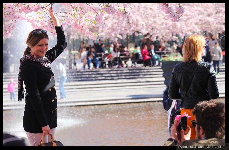 Люди фотографируются среди цветущих сакур