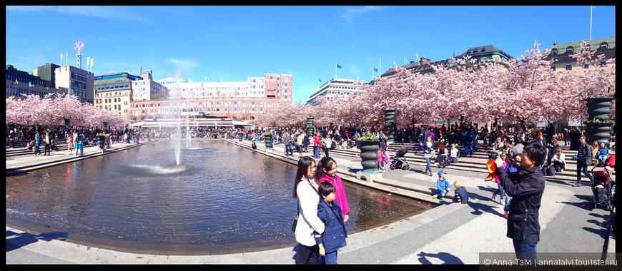 Королевский парк (Kungsträdgården). Вокруг фонтана красиво высажены 63 куста сакуры.