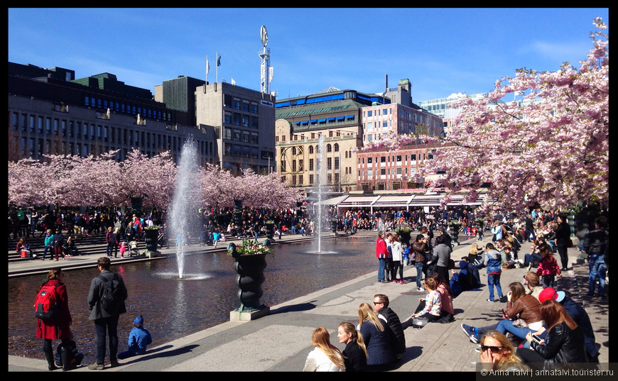 В конце апреля - начале мая здесь цветет сакура