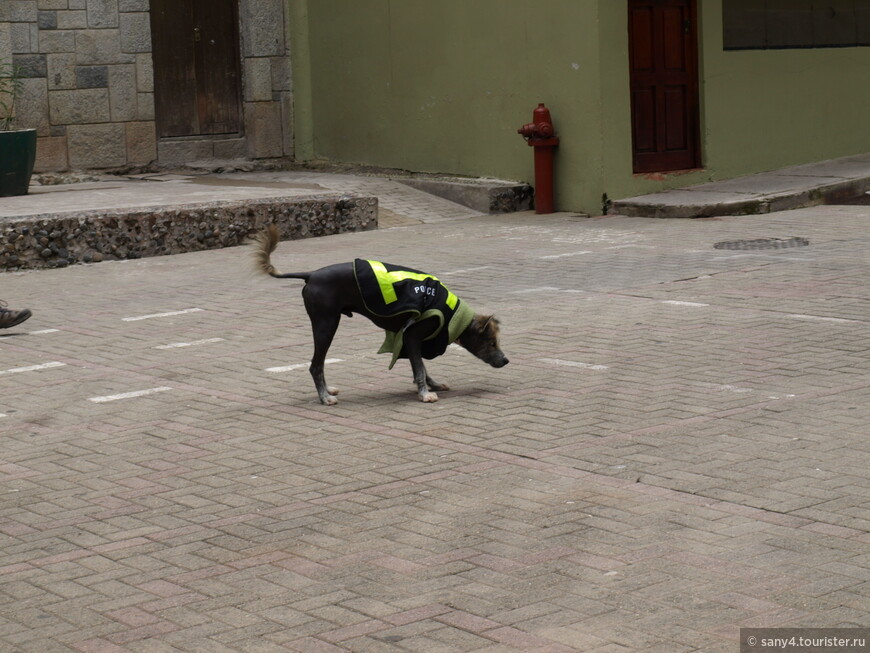"""Собака в полицейском жилете. Новогодняя шутка, наверное. И как мы хохотали, когда вылезшие из-под подворотни два пса в клетчатых штанах и кепках(!!!), дали деру, увидев этого """"полицейского""""!"""