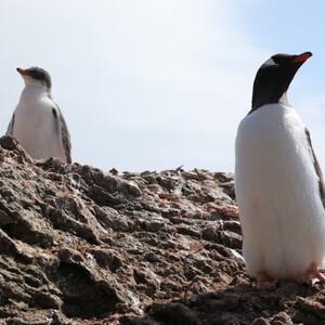 Антарктида. Пингвины и не только