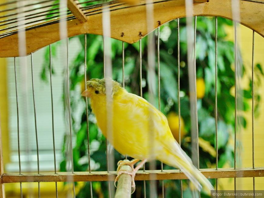 29. В кафе внутри этого торгового центра стоят клетки с птицами, очень интересная компания в обед.