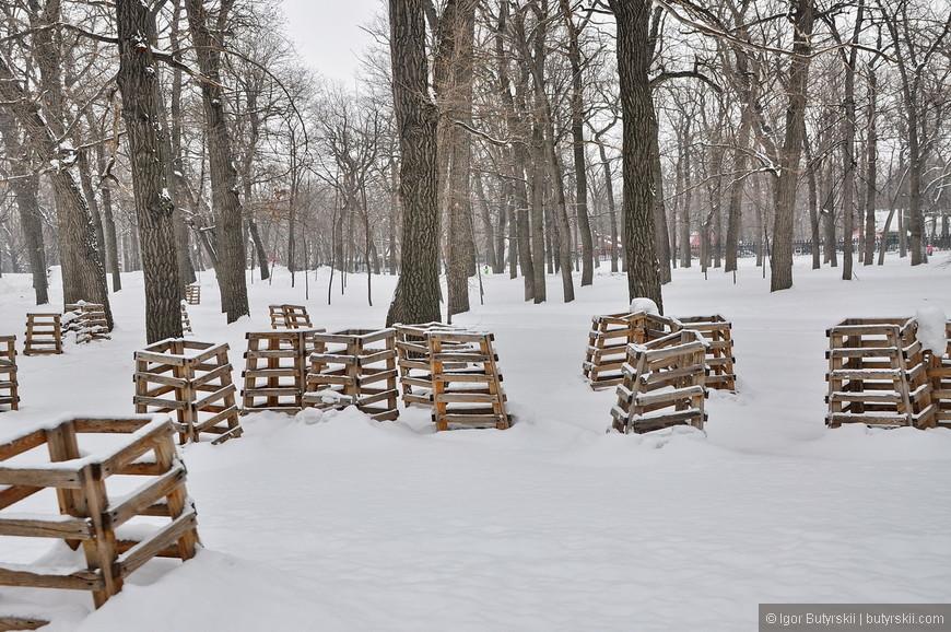 37. Это какой-то склад деревьев видимо, просто насадили как попало. Вообще в парке есть 100 летние дубы.